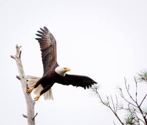 2015-09-27 Eagle
